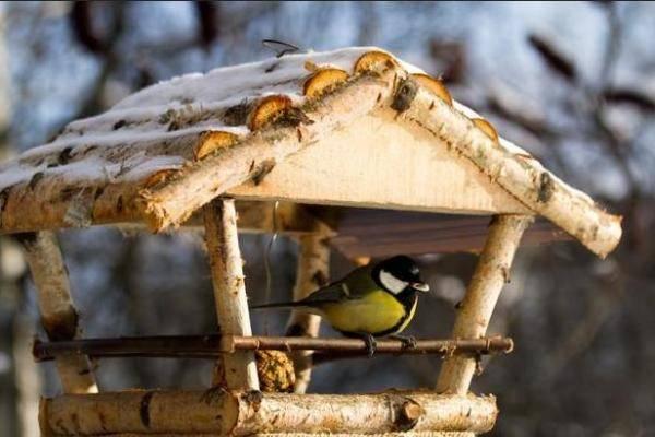 Пластиковые кормушки для птиц своими руками фото 762